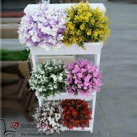 فروش عمده بوته شمشاد رنگی با گلدان