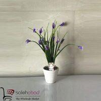 فروش عمده گلدان گل بوته اسپاتی