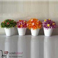 فروش عمده گلدان و بن سای برگ رزماری