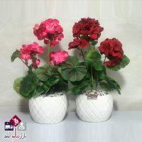 فروش عمده گلدان شمعدانی ۴ گل متوسط