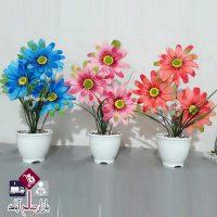 فروش عمده گلدان و گل کوکب سه گل