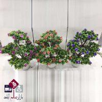 فروش عمده گلدان و درختچه هفت کپه گلدار
