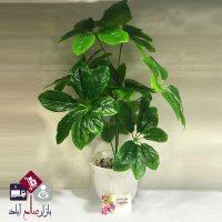 فروش عمده درختچه کوچک برگ شرفلورا