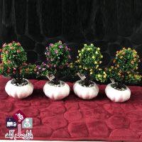 فروش عمده گلدان زینتی درختچه گلدار