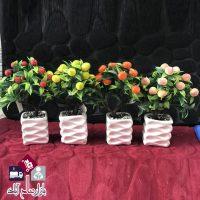 فروش عمده گلدان زینتی درختچه میوه