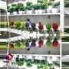 فروش عمده گلدان درختچه کوچک شمشاد