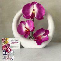 فروش عمده گلدان انگشتری ارکیده سه گل