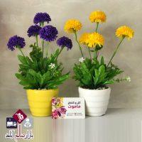 فروش عمده گلدان بوته داوودی پنج گل