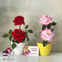 فروش عمده گلدان بوته رز دو گل